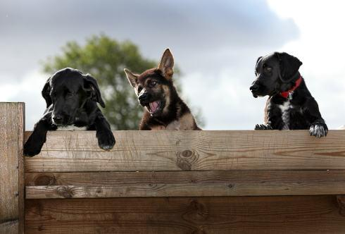 The Advertiser Series: Three police pups enjoying their training