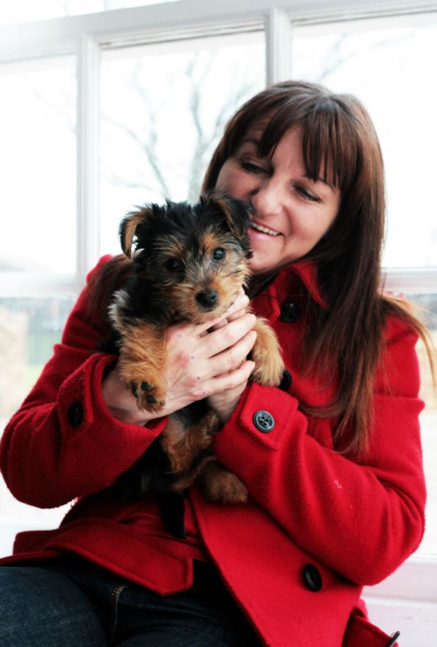 The Advertiser Series: Wendy Prosser, who set up business Doggie Dazzlers, which makes designer clothes for dogs.