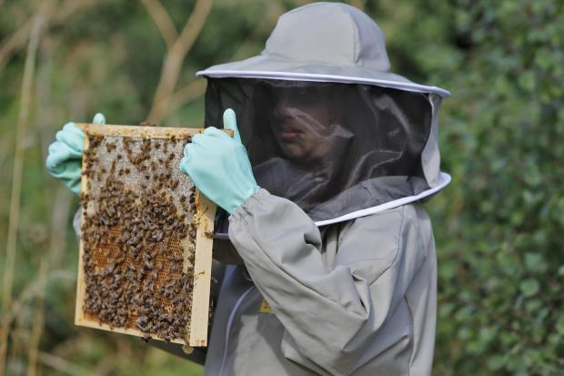 The Advertiser Series: Will beekeepers be allowed to site hives on a Darlington park?