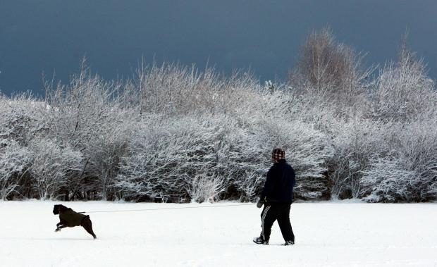 The Advertiser Series: WINTER WALKIES: Dog walkers hold micro-chipping session