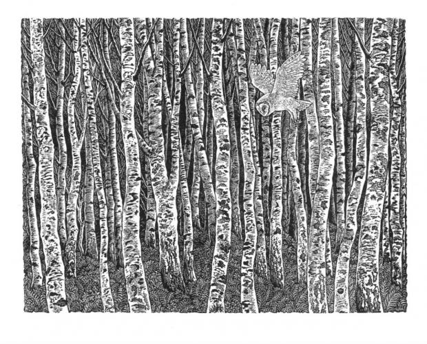 The Advertiser Series: Birch Wood; an image from a current ex