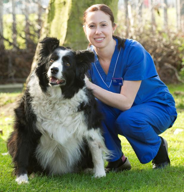 The Advertiser Series: Obese border collie Zed with PDSA head nurse Helen Darnell