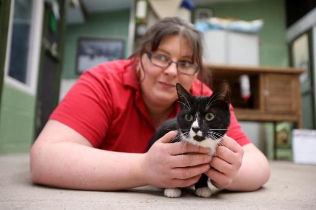 The Advertiser Series: Tina Anderson of Sadberge Boarding Kennels and Cattery with Robin, who is in need of a new home