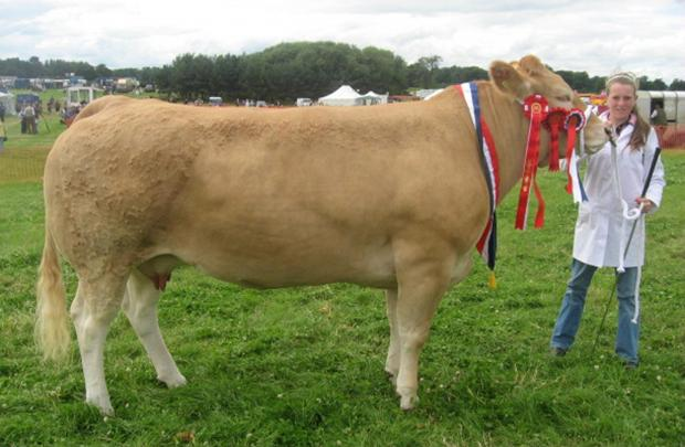The Advertiser Series: The 2009 supreme champion cattle at the show, a Blonde heiffer with Lucy Corner of Brafferton who exhibited with Alan Hall