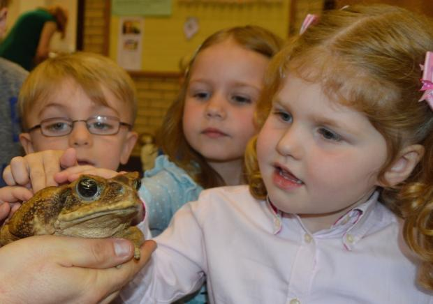 The Advertiser Series: Sheila, a South American Cane Toad, with children at