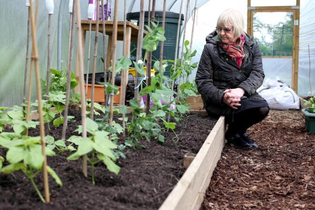 The Advertiser Series: GARDEN DAMAGE: Teaching assistant Teresa Smith pictured in the polytunnel of the garden at Ramshaw Primary School which has been subjected to vandalism from youths in recent weeks  Picture: CHRIS BOOTH