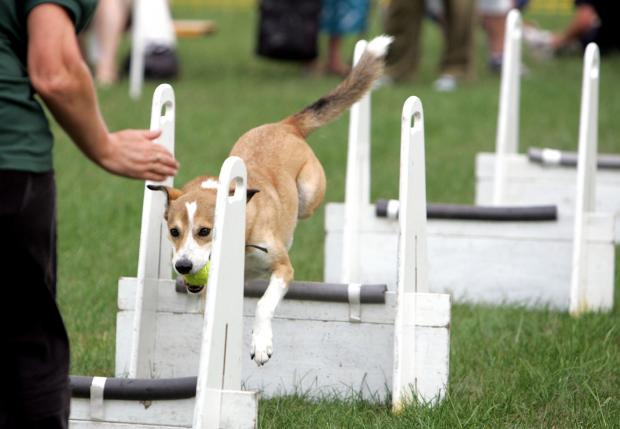 The Advertiser Series: GOOD DOG: The assault course has proved a popular attraction at previous fundays