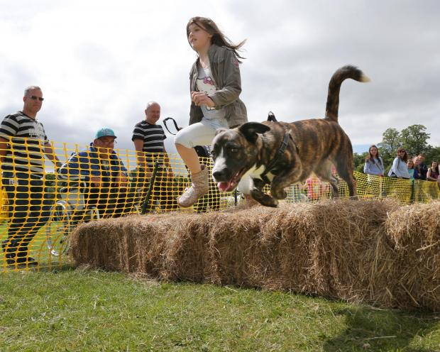 The Advertiser Series: GOOD DOG: Alex Dunn, 11, from Norton, and dog, Judith, jump the hurdles at last year's fun day in South Park, Darlington