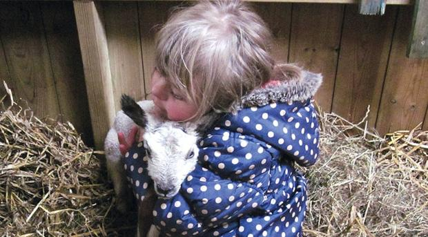 The Advertiser Series: NEW ARRIVAL: Laura Parker, six, with one of this year's lambs at the Mowbray School farm