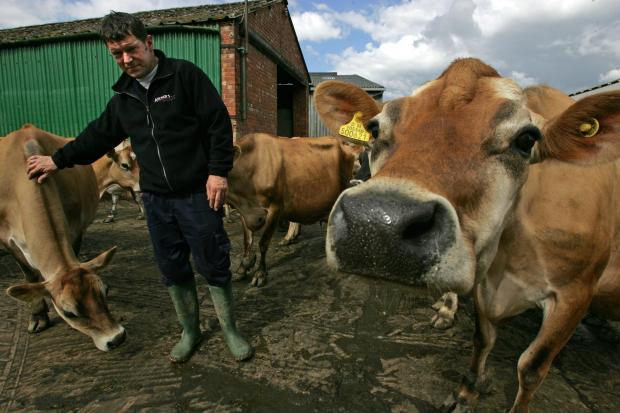 The Advertiser Series: MILKING IT: John Archer, pictured with with some of the Jersey cows from the company's farm