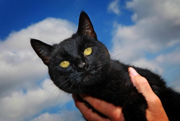 The Advertiser Series: CAT FOUND:The cat rescued by Dave and Sally Rowle