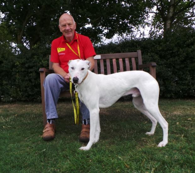 The Advertiser Series: IN NEED: Nelson, a 16-month-old lurcher, pictured with Dogs Trust volunteer Derek Cornforth