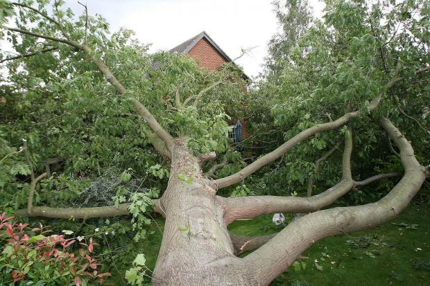 The Advertiser Series: Trees can cause huge damage to properties if they fall